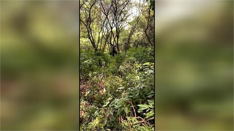 男杉林溪採筍歡慶母親節 失聯迄今未尋獲