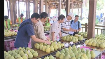 全台唯一!「智慧篩柚」在花蓮瑞穗農會:買柚子手腳要快