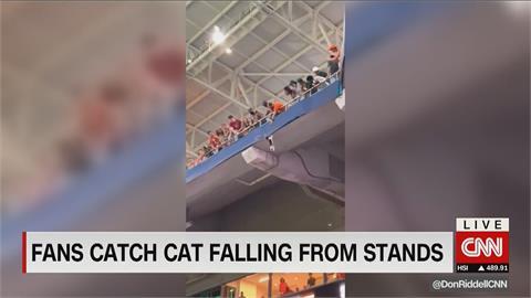 美國賽事場上意外插曲! 國旗神救援墜看台小貓