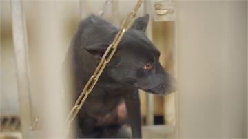 擔心寵物成武漢肺炎受災戶 獸醫再強調:寵物傳染人仍無證據