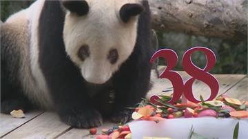 最高齡圈養貓熊等同人類100多歲 重慶動物園「新星」38歲了