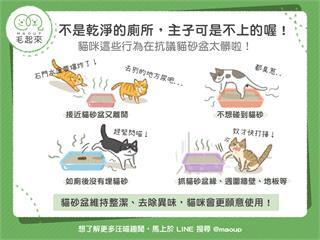 【貓奴看過來】不是乾淨的廁所,貓主子不上?抗議貓砂盆太髒的4個行為!|寵物愛很大