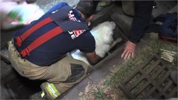 狗兒受困地下排水管!消防隊兩個小時搶救成功