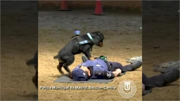 超級神犬!西班牙警犬會做CPR