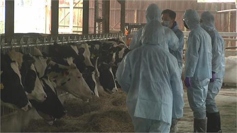 快新聞/新北林口再添牛結節疹牛隻確診 疫情無擴散最快5月中下旬解除