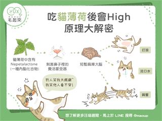 【毛孩食品解析】吃貓薄荷會High? 原理大解密|寵物愛很大