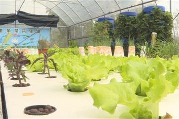 「魚菜共生」兼具實用與美觀 業者望推廣「環境永續」