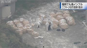 日福岡爆首起禽流感疫情 今撲殺9.3萬隻雞