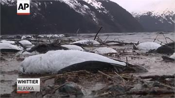 生態浩劫!美國西岸上百萬海鳥死亡 元凶就是「它」