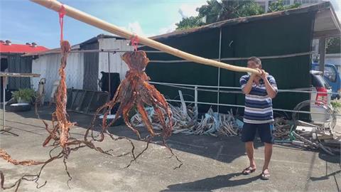 這個風箏竟然有香味 台東章魚乾風箏超獨特