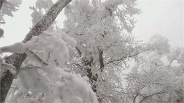 宛如置身寒冷北國 水氣不足只降冰霰太平山如童話世界 遊客公開徵婚