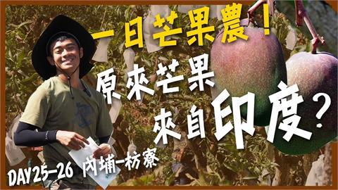 太聰明!芒果農DIY驅猴神器 「12小時自動定時爆」嚇跑貪吃猴