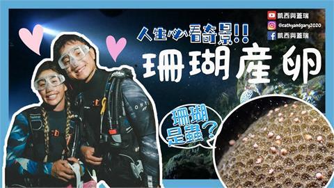 搶看「粉紅珍珠」海!珊瑚產卵大噴發潛友搶看 KID笑:像海底夜店