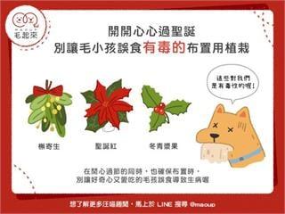 【居家毛學問】開開心心過聖誕~別讓毛小孩誤食有毒的布置用植栽|寵物愛很大