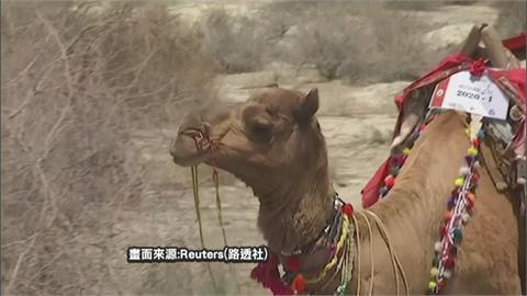 巴基斯坦「駱駝行動圖書館」 免費載書進偏鄉