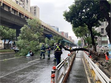 快新聞/北市復興北路20公尺高路樹突倒塌 2人遭砸中急送醫