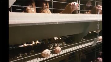 「摩斯漢堡」駁斥雞蛋爭議 基金會:指控有憑據
