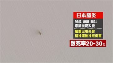 防日本腦炎!高雄百台捕蚊燈 五天抓三萬蚊