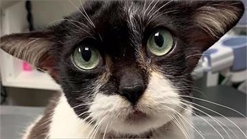 美國流浪貓撞臉「尤達大師」!網友搶著領養