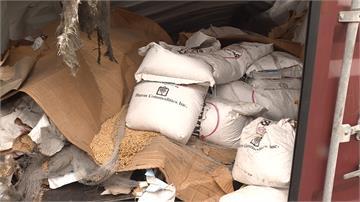 臭!港口食品櫃毀損 百噸黃豆曝曬五個月