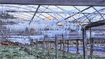 《冰雪奇緣》神還原! 武陵農場「水晶簾幕」美翻