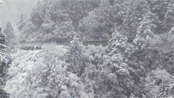 第二波寒流水氣豐沛 太平山一夜成銀白世界