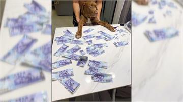 愛犬咬爛三萬元鈔票 2張小朋友吞下肚 飼主笑稱「徵拼圖高手」救現金