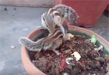 細心照顧撿到的小松鼠,松鼠媽媽回來,「母子相聚」畫面讓大男生痛哭流涕!|寵物愛很大