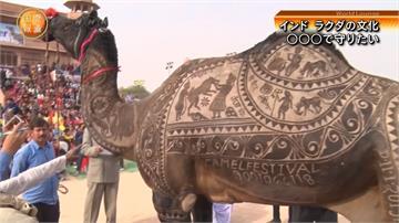 維他命C是牛奶三倍!印度駱駝奶商機大