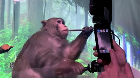 「超能」科技問世! 馬斯克釋出猴子用腦打電動影片