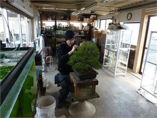 台灣盆栽第一人!日本學藝五年返台得獎無數 周元鵬決定在台收徒傳承技藝