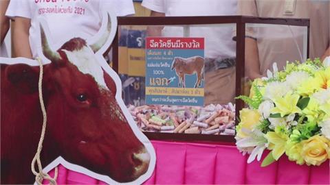 鼓勵接種花招多 印尼送活雞泰國抽活牛
