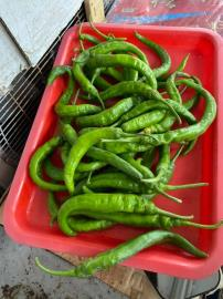 鄰居送「綠彎蔬菜」她困惑!美食老饕曝正確答案:不吃辣的福音