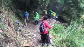 八通關古道虎頭蜂群攻擊登山客 22人被螫傷