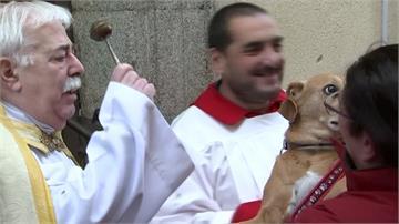 動保聖人冥誕紀念 西班牙民眾帶毛小孩上教堂