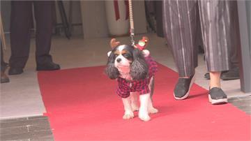 高端設備救治受傷毛小孩!台中成立亞洲首家寵物微創訓練中心