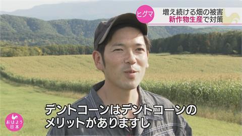 北海道棕熊侵農田年損2.2億日圓 改種「這一味」熊就不來了