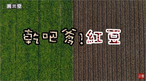 異言堂/農民運用「替代農藥」方案 採紅豆多半噴除草劑