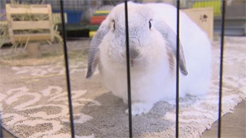 可愛兔兔好療癒! 寵物兔餐廳成打卡新熱點