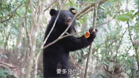 苦等不到母熊 林管處首度扛下照顧幼熊責任