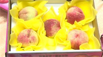 梨山水蜜桃季登場!上山避暑品茗吃水蜜桃