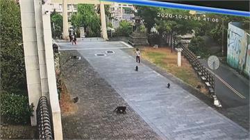 「猩球崛起」雲林版 大鬧校園全為了大王椰