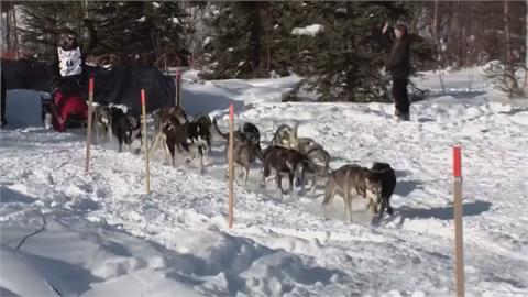 狗拉雪橇賽開跑!  8至15天橫越阿拉斯加