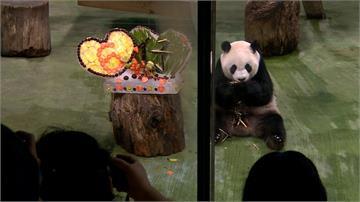 貓熊圓仔6歲生日趴 動物園特製消暑冰蛋糕