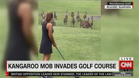 罕見!逾10隻袋鼠亂入高球場 集體現身與人對決