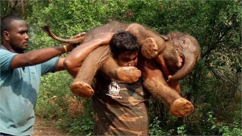 男子揹100公斤小象奔跑找大象媽媽 感人影片讓網友瘋傳!