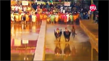 跑百米速度超越世界紀錄!印度賽牛工人爆紅獲邀進國家隊
