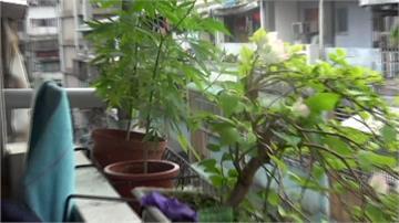 僅有高中學歷 男公寓自製大麻栽種設備