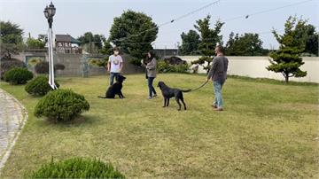 搜救任務少不了「牠」!屏東業者打造「養老院」讓退役搜救犬安享晚年