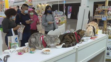 毛小孩也要過節 南台灣最大檔寵物展登場